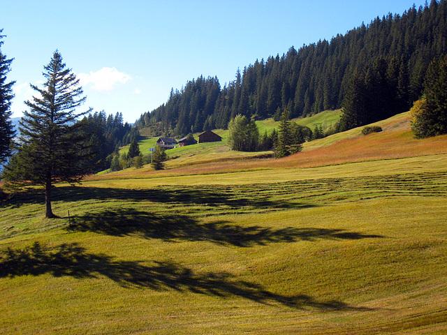 IMG 3861 Lange Schatten