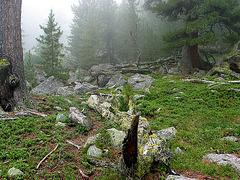 Bergwald