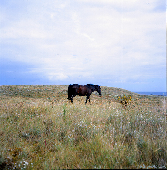 the big brown horse - 2
