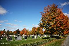 Quand l'automne meurt...
