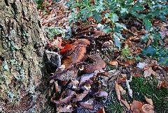 20101013 8513Waw Pilz, Externsteine