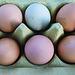 Frisch gelegte Sietow-Eier