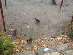 Na rybníku Svět / Apud fiŝlago Mondo