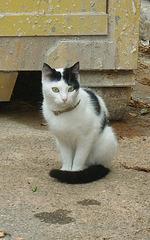 Chat de Pieusse