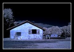 Das Mondkalb