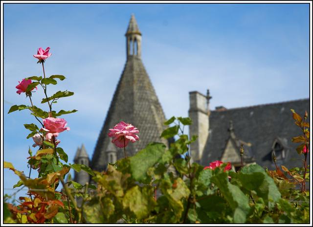 Les roses de l'abbaye de Fontevraud