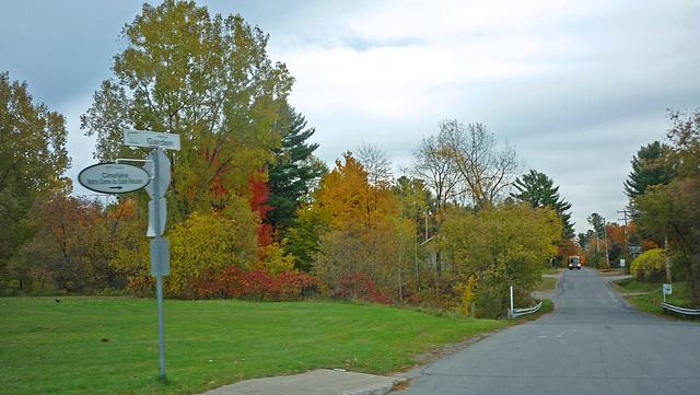 Chemin aux arbres colorés!