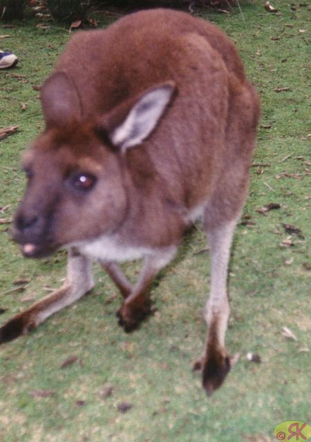 1997-07-23 108 Aŭstralio, Kangaroo Island