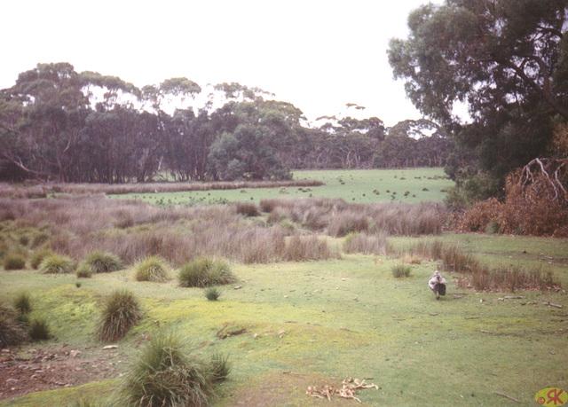 1997-07-23 111 Aŭstralio, Kangaroo Island