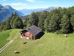 IMG 3791 Alp im Haslital