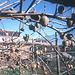 1997-07-15 36 Novzelando, kivio-farmbieno