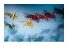 Canon Birds
