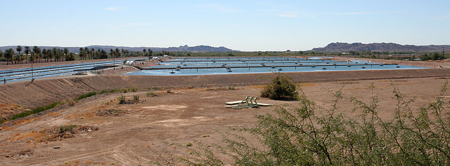 Desilting Pools at Imperial Dam (7992)