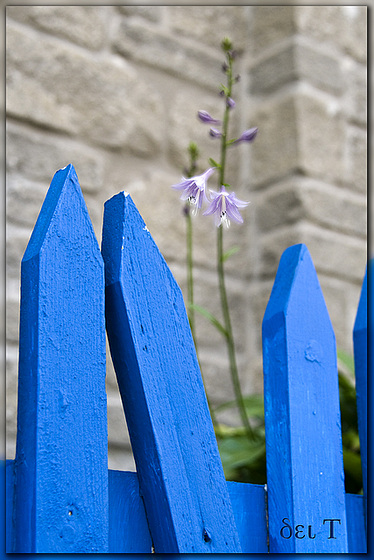 Lean On Me | Benevolently Bonded in Blue(s)