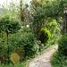 Le jardin de Persiflore  (3)