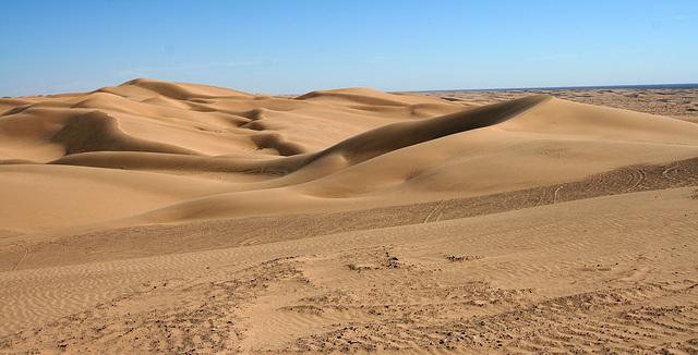 Algodones Dunes Near Glamis (8026)