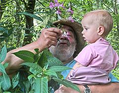 apprendre la forêt...et admirer la balsamine