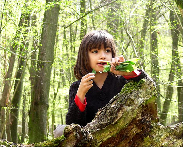 apprendre la forêt ...et croquer l'ail des ours