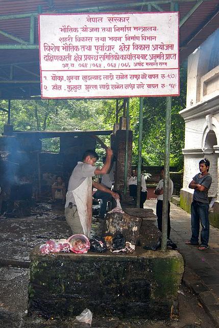 Slaughtering in Dakshin Kali