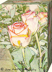 A box of roses for my friends on Ipernity