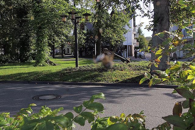 20100922 8298Waw Zingst, Kreuzspinne