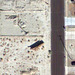 Roof Trusses in Google Satellite View