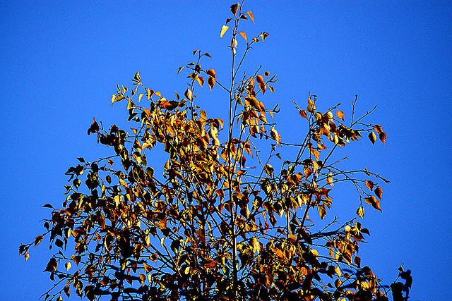 20101025 8638Taw Herbst
