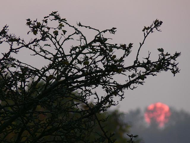Sonnenuntergang - new sunset