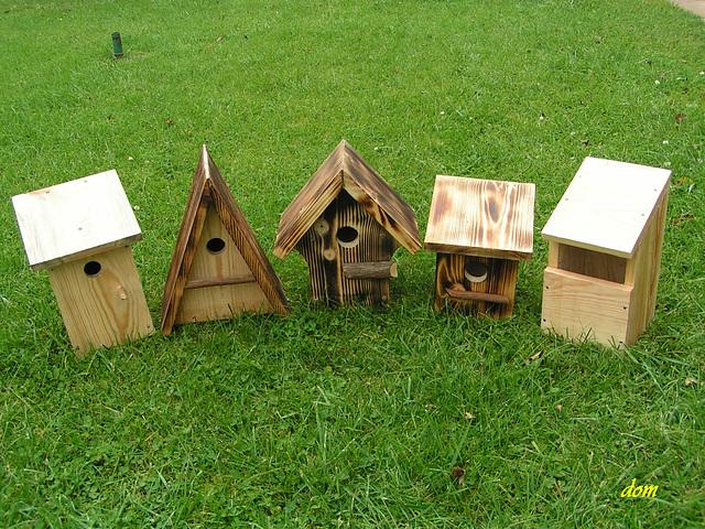 au petits soins pour les oiseaux