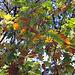 20101020 8580Aw [D~GT] Herbst, Emsquellen