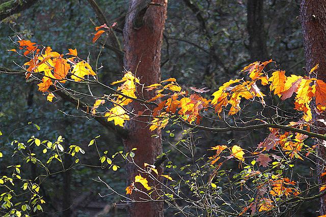 20101020 8579Aw [D~GT] Herbst, Emsquellen