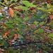 20101020 8578Aw [D~GT] Herbst, Emsquellen