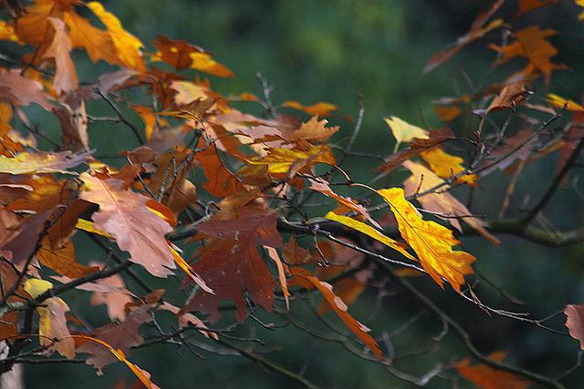 20101020 8577Aw [D~GT] Herbst, Emsquellen