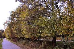 20101020 8581Aw [D~GT] Herbst, Emsquellen
