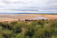 Strand an der Ostküste  Schottlands