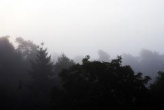 foggy | layer