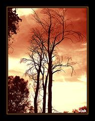 arbre1-2