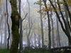 dans la forêt lointaine...le leibelthal
