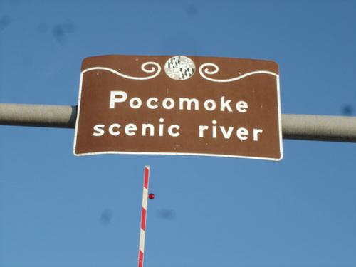 Pocomoke scenic river - Maryland, USA - 18 juillet 2010 - Photo originale