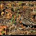 Bécassine des marais DSC1655