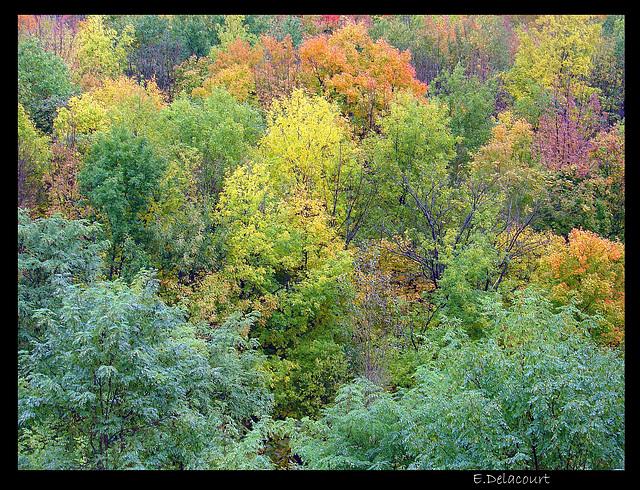 couleurs d'automne au Canada