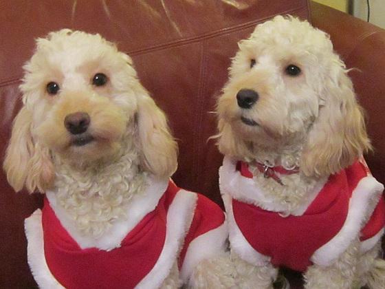 Roxy & Ruby