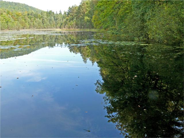 l'étang du Lieschbach : la libellule