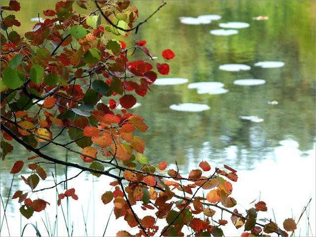 le bel automne au Lieschbach