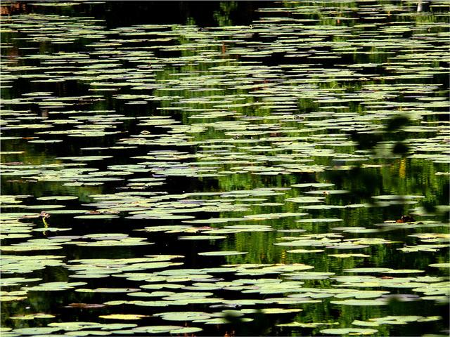 le Lieschbach : le royaume des eaux sombres où la grenouille rit...