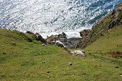 Cliff Sheep