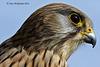 Falcon Profile 108 Explore
