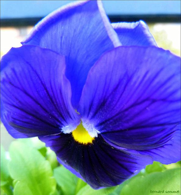 Pensament blau per a la meva amiga Carme