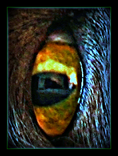 Self-Portrait - (Halloween Goodies XV)