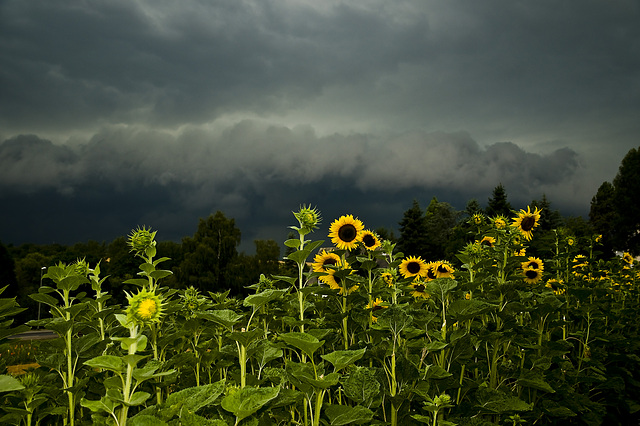 Unwetter in Bad Camberg